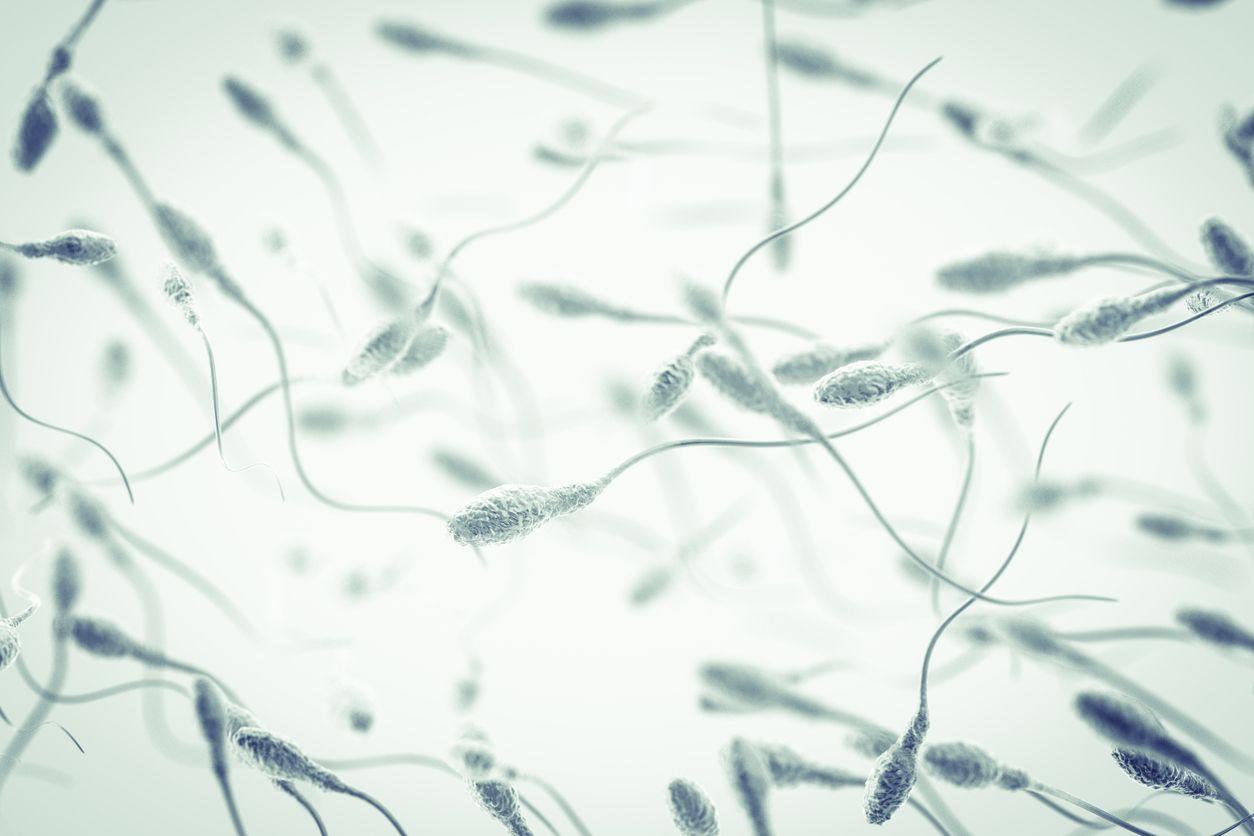 Male fertility