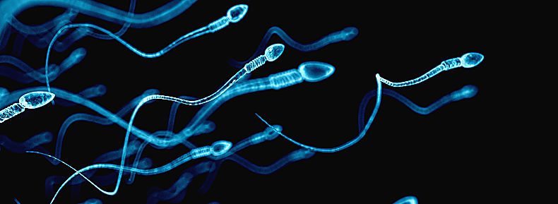 Unveiling the male factor infertility physiology and its potential contribution to ART success