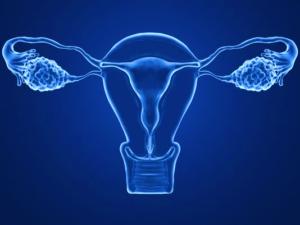 ovario artificial