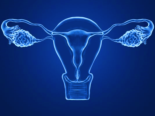 Why create an artificial ovary?