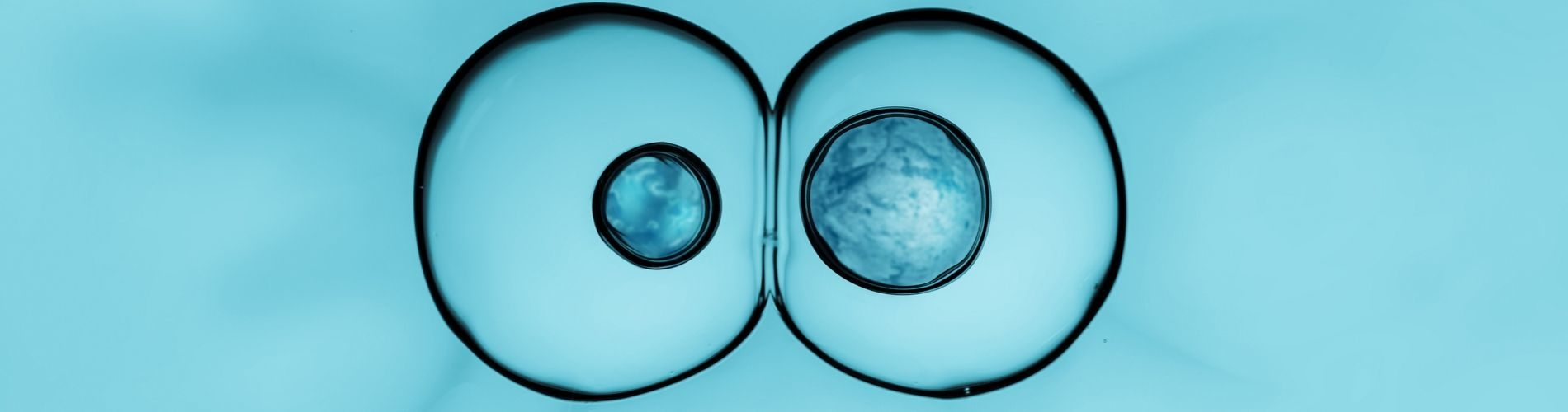 IVIRMA Grows Embryos to Day Nine, Isolates Potential Mosaic Biomarker Gene